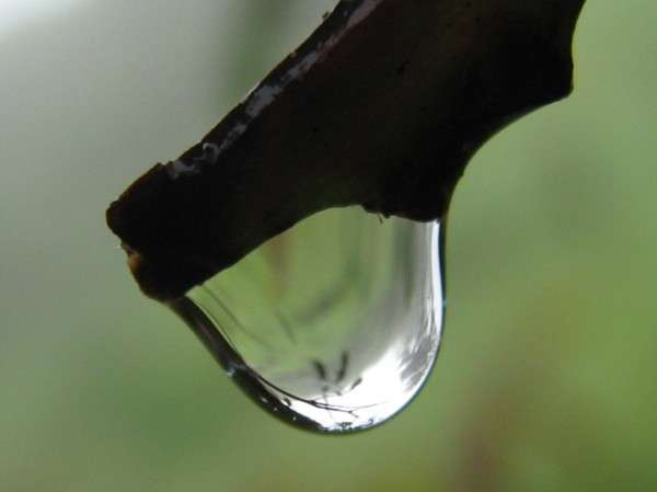 Dew Drop Photography
