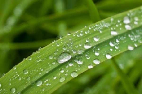 Dew Drop Photography 7