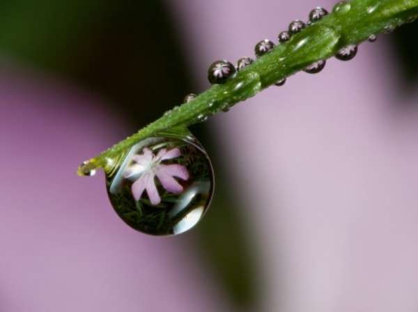 Dew Drop Photography 9
