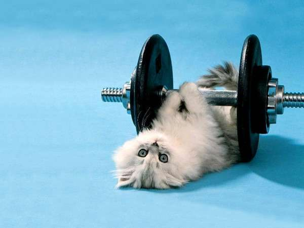 Cat Cute and Funny Excersie