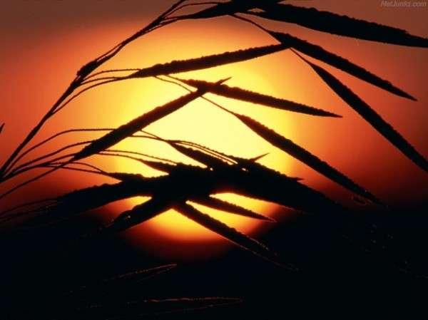 Sunrise Photography (10)