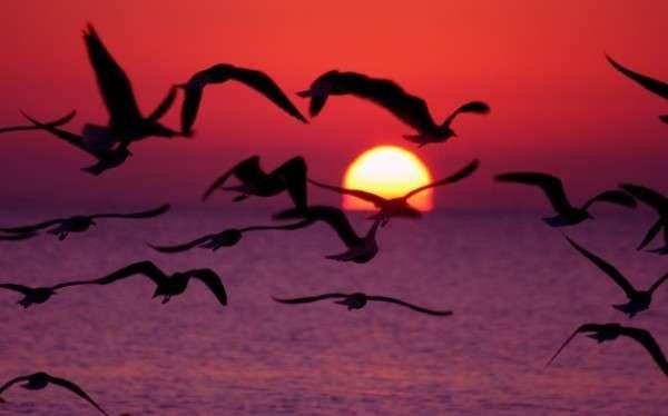 Sunrise Photography (23)
