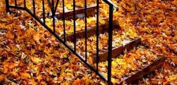 1-one-Autumn.jpg