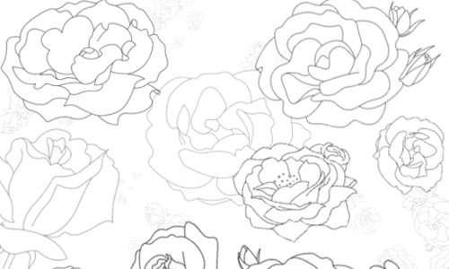Roses Brushes