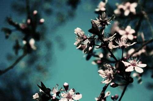 beautiful spring flower wallpaper