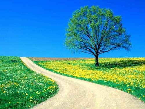 Flowers-Spring Road