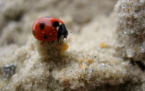 Lady Bug on the Tower of Sand wallpaper