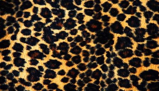 High contrast leopard skin texture free download hi res high resolution