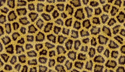 Beautiful leopard skin texture free download hi res high resolution