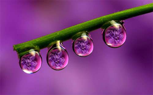 Purple Raindrops wallpaper
