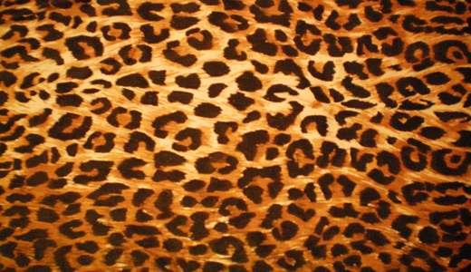Orange leopard skin texture free download hi res high resolution