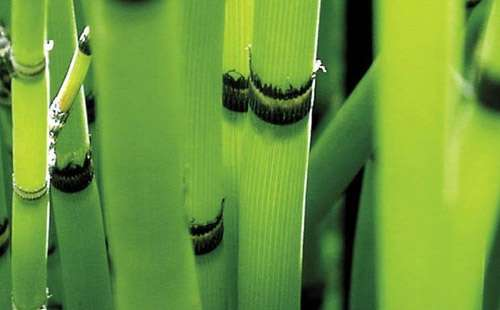 Green Bamboo iPad Wallpaper