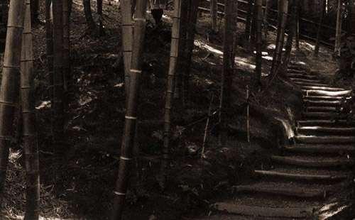 Bamboo Path iPad Wallpaper