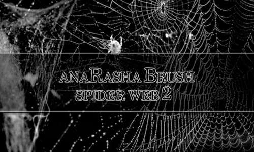 spider web brush 2
